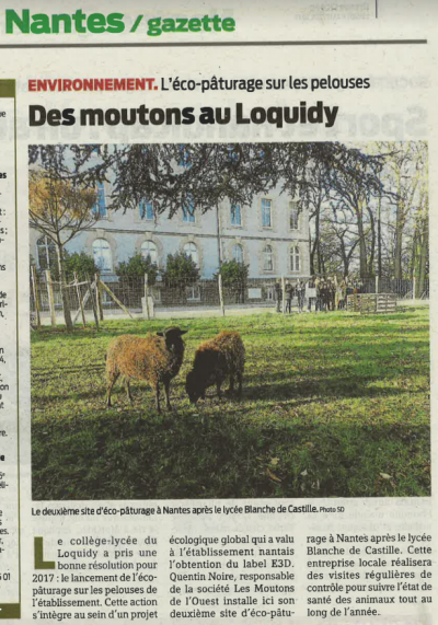 article-po-loquidy